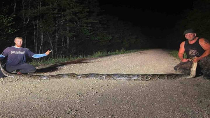 Cazadores capturan a pitón de casi seis metros en Florida