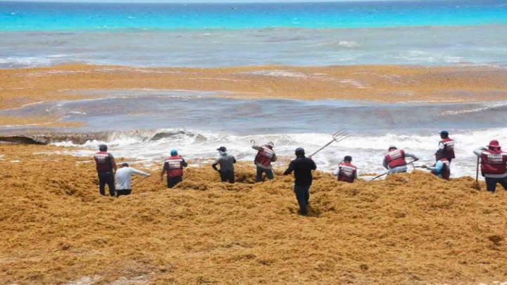 Costas de Quintana Roo saturadas por la llegada del sargazo