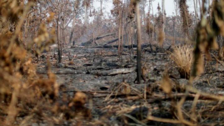 ALERTA AMBIENTAL: la Amazonía esta emitiendo CO₂